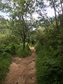 SS Hike 25